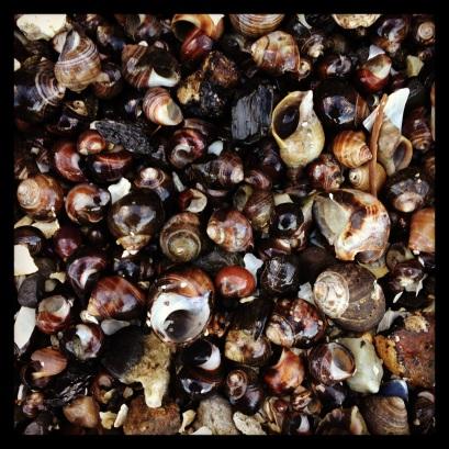 2014 09-14 Bar Harbor Shells